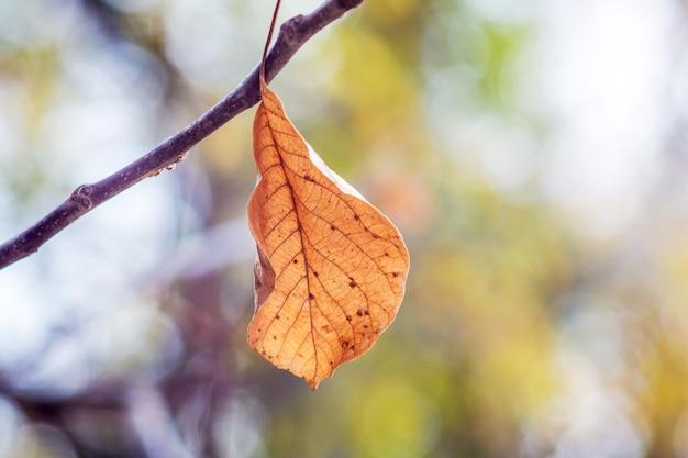 ぼやけた背景を持つ枝に孤独な乾燥した茶色の葉_