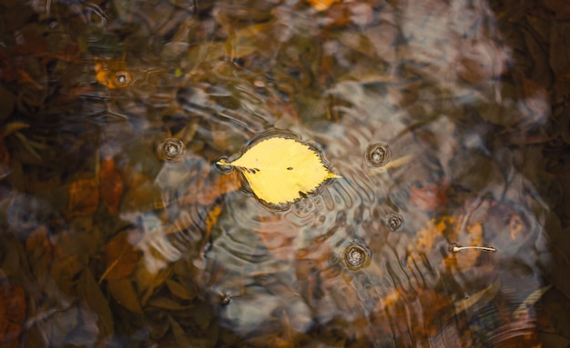 The lone leaf on the water