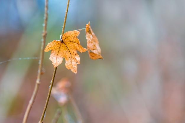 森の中のぼやけた上に孤独なオレンジ色のカエデの葉