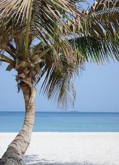 Lone palm tree on the beach