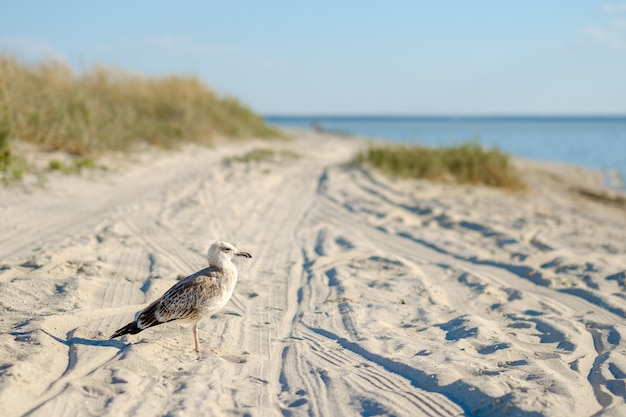 A lone seagull on the sand of a deserted beach against the backdrop of the sea. wild bird in its natural habitat.