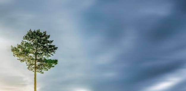 濃い青空を背景に孤独な木。孤独の象徴。風景自然