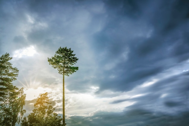 Lone tree against a dark blue sky. symbol of loneliness. landscape nature
