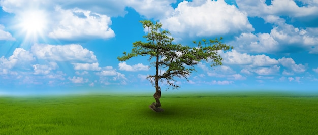 The lone tree on fertile ground at the blue sky and cloud background
