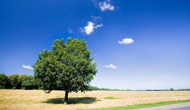 畑に生えている孤独な木