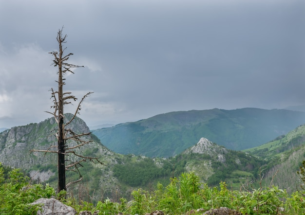 A lone tree on top of the mountain is damaged by a thunderstorm.