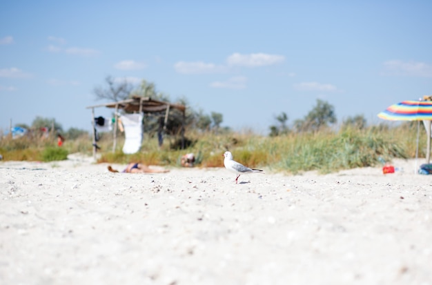A lone white gull sits on a sandy beach against the backdrop of an abandoned beach