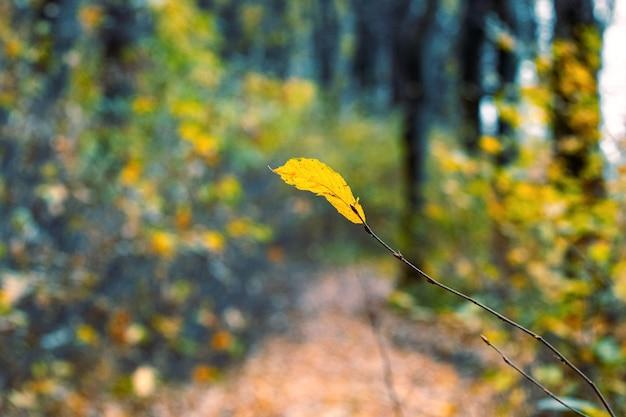 Одинокий желтый лист на ветке в осеннем лесу. осень в лесу