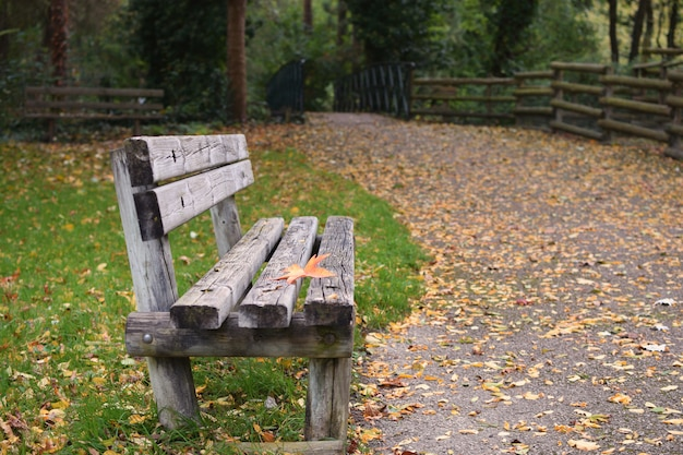 Loneliness  autumn fall bench maple leaf copyspace solitude depression new start procrastination