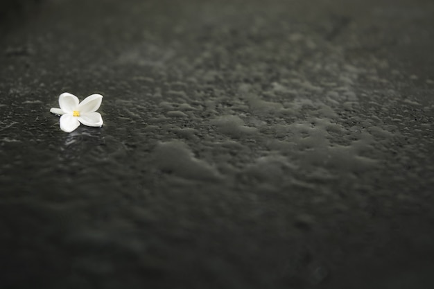 Loneliness flower over wet black background with copy space