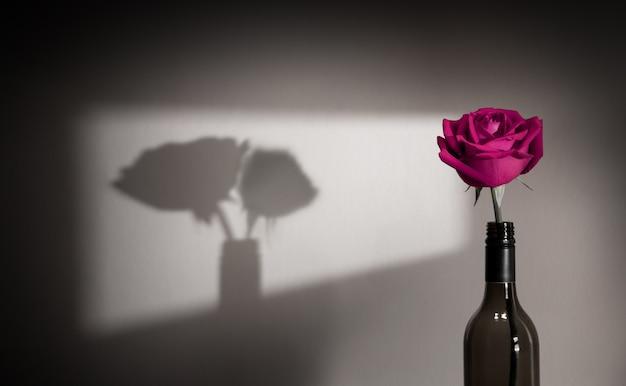 외롭고 슬픔 느낌 개념. 커플로 벽에 단일 핑크 장미 꽃 음영 그림자. 사랑과 발렌타인 데이의 상징