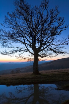 Lonely autumn naked tree on night mountain hill top in last sunset light (and its reflection in a puddle)