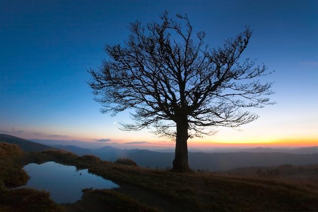 最後の日没の光の中で夜の山の丘の頂上にある孤独な秋の裸の木(そして近くの水たまり)