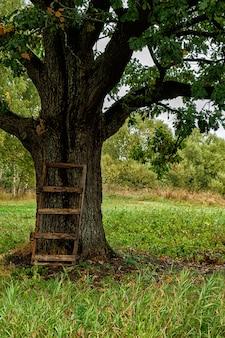孤独な秋のオークの木