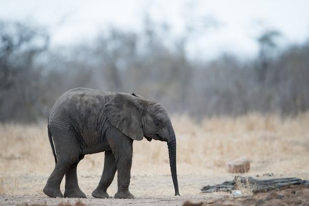 Одинокий слоненок, стоящий на земле