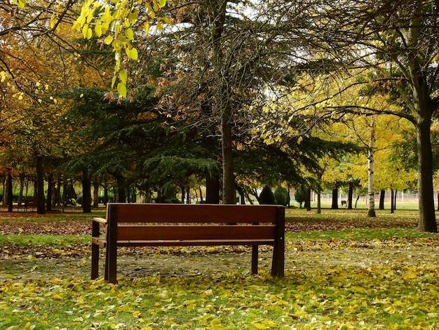 A lonely bench in autumn