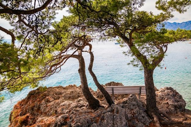 Одинокая скамейка под старыми соснами в бреле, макарская ривьера, хорватия
