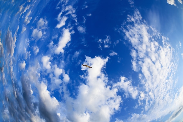 Lonely bird flying high in the blue sky with a curly white clouds