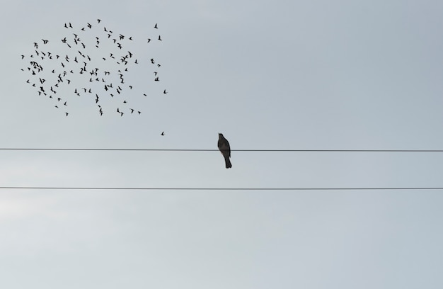 Lonely bird sitting on wires