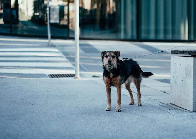 昼間にベンチの隣に立っている孤独な黒と茶色の野犬