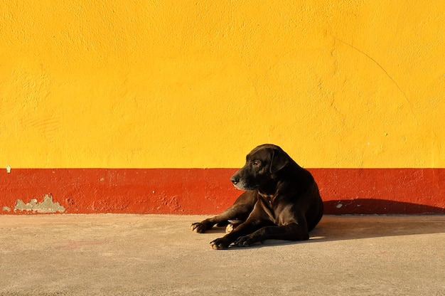 A lonely black dog on an orange wall with red stripes