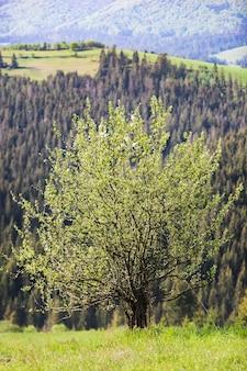 山の表面に咲く孤独な木