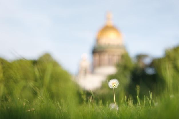 Одинокий цветок одуванчика на траве поля или луг на закате