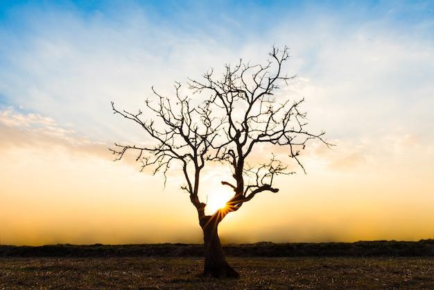 세계 지구의 날 개념에 대 한 일몰시 외로운 죽은 나무