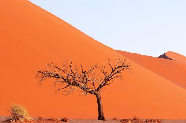 Одинокое мертвое дерево в пустыне намиб