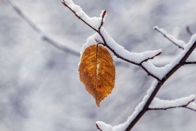 Одинокий сухой лист на заснеженной ветке дерева, зимний вид