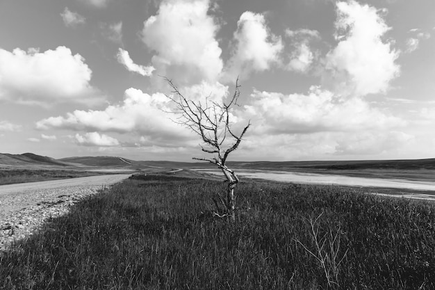 Lonely dry tree near the road near a driedup lake a beautiful landscape with a road blue sky