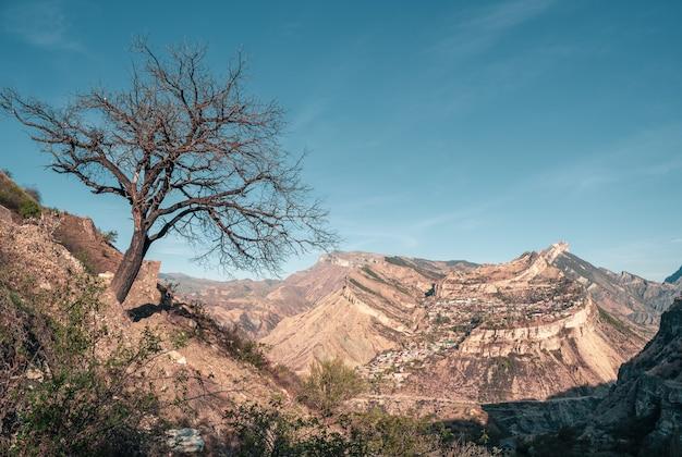 崖の近くの孤独な乾いた木。ダゲスタンのグニブ高原。