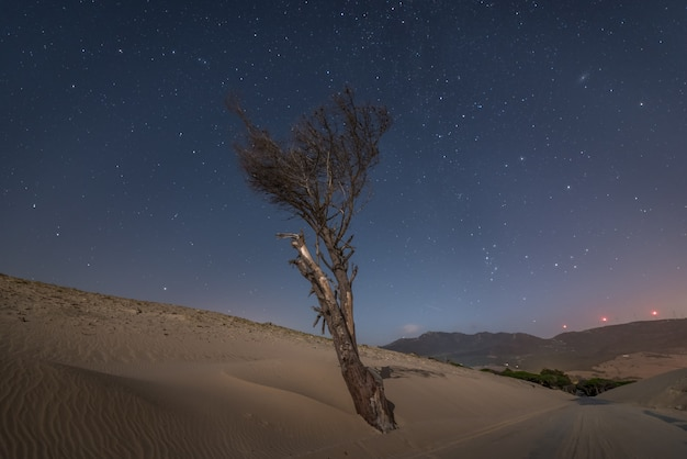 Lonely dry tree on a sand dune next to a road at night in the south of spain