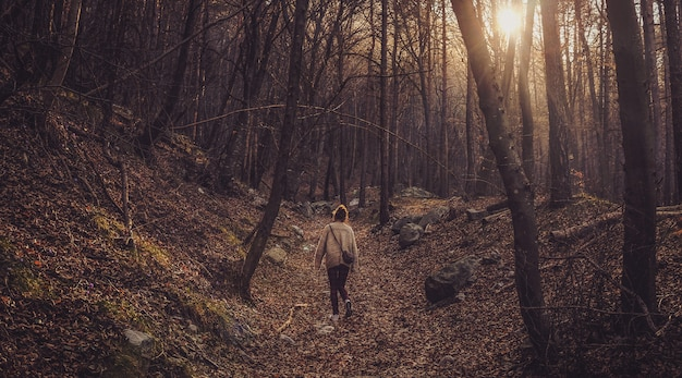 Lonely female walking in the forest with bare trees during sunset