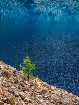 山の湖に対して孤独なモミ。ターコイズブルーの山の湖の近くに針葉樹のある大気中の高山の風景。垂直方向のビュー。