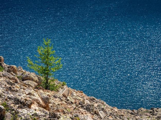 山の湖に対して孤独なモミ。ターコイズブルーの山の湖の近くに針葉樹のある大気中の高山の風景。