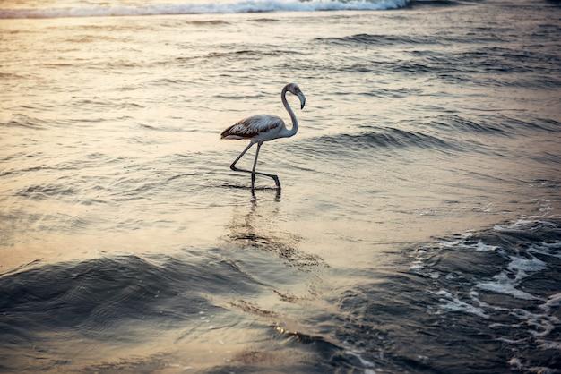 海に沈む夕日の孤独なフラミンゴ