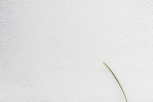 Lonely grass leaf at white concrete wall texture - background