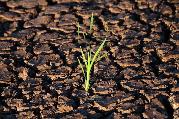乾燥したひびの入った地面の孤独な緑の芽