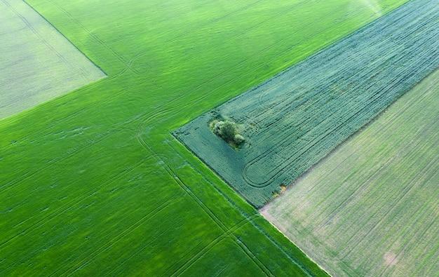 夏の畑で孤独な緑の木