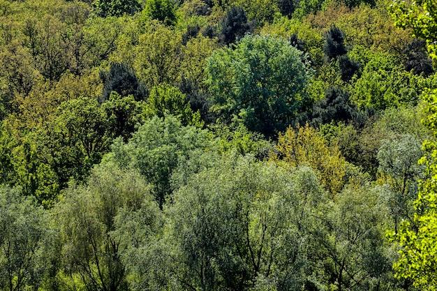 Одинокие деревья с зеленой листвой в летний период года наступает солнечное утро и становится тепло, крупным планом