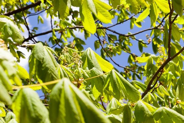 연중 여름철에 녹색 잎이 달린 외로운 나무가 자라며 맑은 아침이 와서 따뜻해졌습니다.