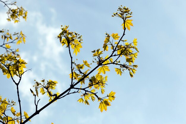 Одинокие деревья с зеленой листвой в летний период года наступает солнечное утро и становится тепло