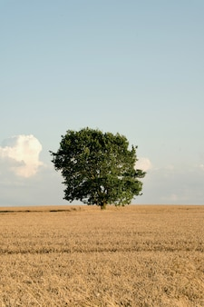 Lonely harvest tree