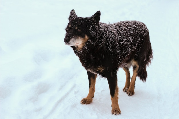Lonely homeless dog in the winter