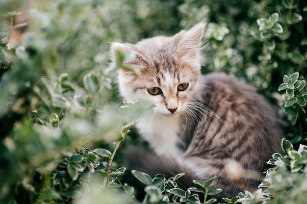 夏の自然で屋外の緑の芝生に隠れている孤独な子猫。茂みに座っている美しい家畜。可愛いキティの表情豊かなポートレート。野生動物。哺乳類のペット。肉食の捕食者狩り