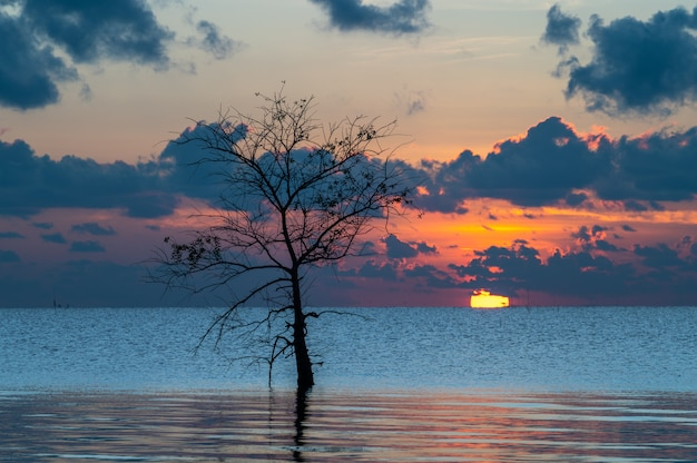 Lonely of mangrove tree in lake with sunrise at pakpra, phatthalung, thailand