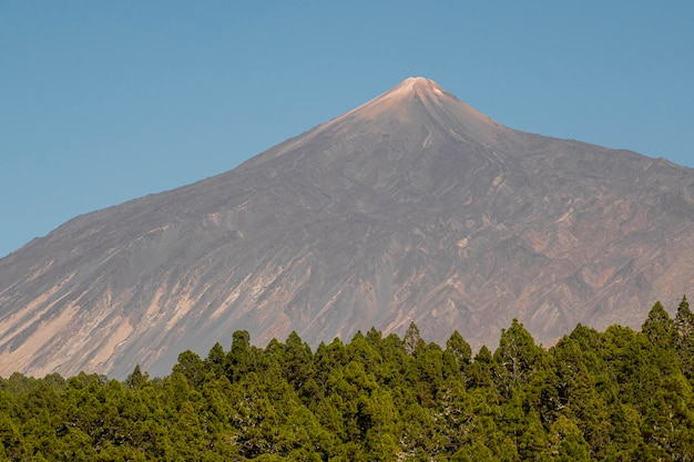 Lonely mountain peak with evergreen forest