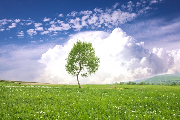 Lonely one tree over big clouds on a blue sky. tranquil landscape