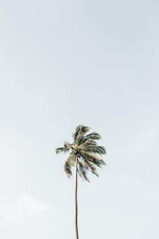 큰 푸른 하늘에 대 한 외로운 열 대 이국적인 코코넛 야 자 나무. 중립국. 푸켓의 여름 및 여행 개념